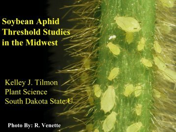Soybean Aphid Threshold Studies in the Midwest - University of ...