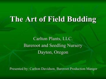 Field Budding