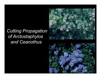 Propagating Arctostaphylos and Ceanothus