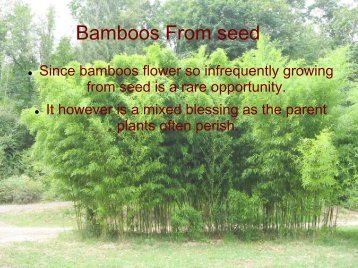 How do we get new bamboos?
