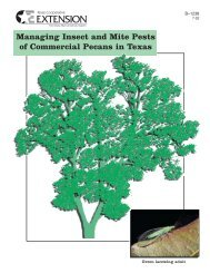 Managing Insect and Mite Pests of Commercial Pecans in Texas