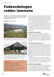 Fødeavdelingen redder lammene - Fagbladet Økologisk Landbruk