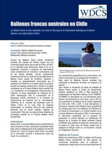Ballenas francas australes en Chile - WDCS