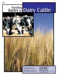 Feeding Barley to Dairy Cattle