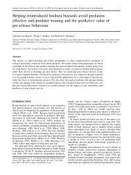 Helping reintroduced houbara bustards avoid predation - Nwrc.gov.sa