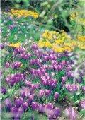 Les merveilles du printemps Les merveilles du printemps - Page 3