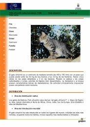 Felis silvestris catus (Linnaeus, 1758) Gato ... - Interreg Bionatura