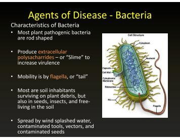 Agents of Disease - Bacteria g