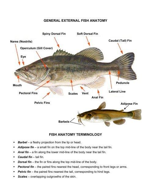 General External Fish Anatomy Fish Explore Biology