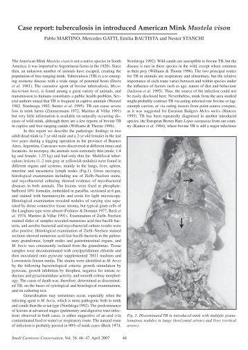 Case report: tuberculosis in introduced American Mink Mustela vison