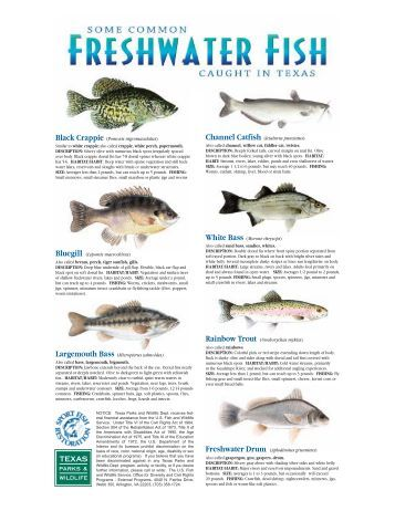 Msrp fish identification card fish contamination for California saltwater fish species