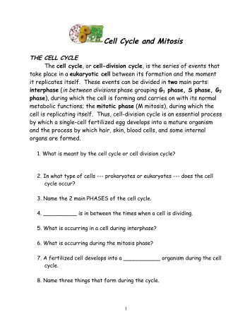 cell cycle worksheet answer key - Termolak