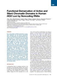 Functional Demarcation of Active and Silent Chromatin Domains in ...
