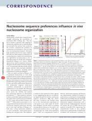 Nucleosome sequence preferences influence in vivo nucleosome ...