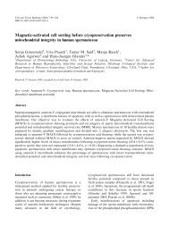 Magnetic-activated cell sorting before cryopreservation preserves ...