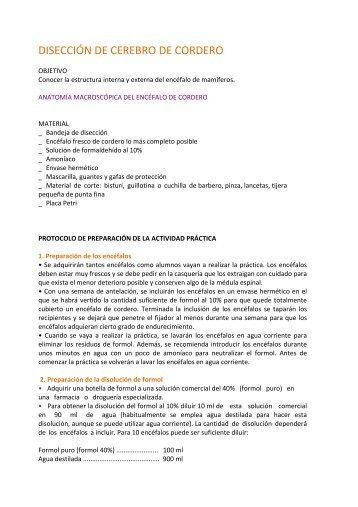 DISECCI€N DE CEREBRO DE CORDERO - Colegio Maravillas