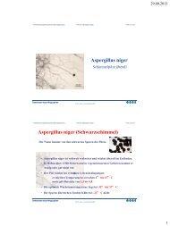 Aspergillus niger Aspergillus niger (Schwarzschimmel)