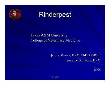 Rinderpest Powerpoint - College of Veterinary Medicine - Texas ...