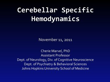 Cerebellar Specific Hemodynamics - Neurometrika