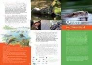 Otters terug in rivierenland (otterfolder) - ARK Natuurontwikkeling