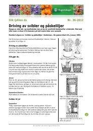 Driving av svibler og påskeliljer - Hageselskapet