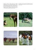 Quelles pratiques d'alimentation dans les élevages de sport - Page 7