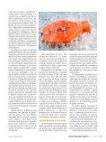 PROPRIEDADES FUNCIONAIS DAS PROTEÍNAS DO PEIXE - Page 4
