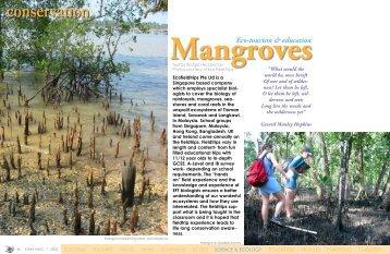 Mangrove - X-Ray Magazine