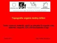 Topografie orgánů dutiny břišní