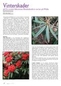 Utgave nr 2 - Den norske Rhododendronforening - Page 4