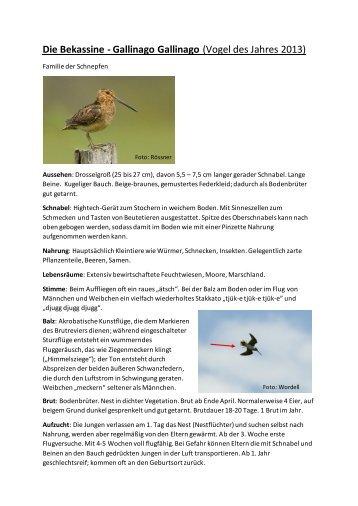Infos zur Bekassine von Kerstin Wernicke