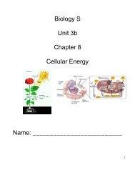 Biology S Unit 3b Chapter 8 Cellular Energy Name: