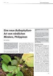 Eine neue Bulbophyllum- Art vom nördlichen Mindoro, Philippinen