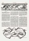 PDF - Jugend - Page 7