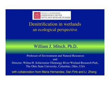 Denitrification in wetlands