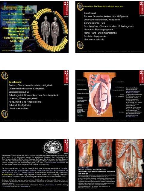 Bewegungsapparat II: Bauchwand Becken, Bein, Schultergürtel ...