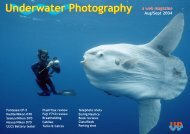 Underwater Photography - Free