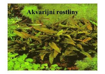 pojednání o rostlinách - Akvarijní ryby