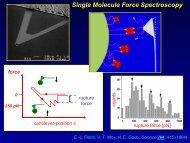 Single Molecule Force Spectroscopy