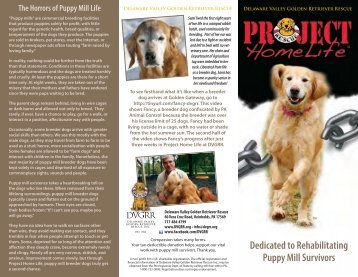 The Horrors of Puppy Mill Life - Delaware Valley Golden Retriever ...