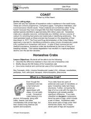 What is a Horseshoe Crab - College of Marine Science