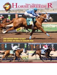 Bay Head King - New Mexico Horse Breeders Association