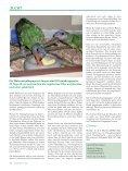 Was tun, wenn die Elternvögel ihre Jungen rupfen? - Page 4