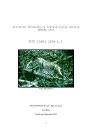 RIS (Lynx lynx L.) - Natura 2000