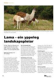 Lama - ein yppeleg landskapspleiar