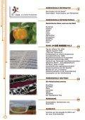 Kniffliges Musik - Musikschule Tettnang - Seite 4