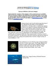 Census of Marine Life Iconic Images Captions and Credits