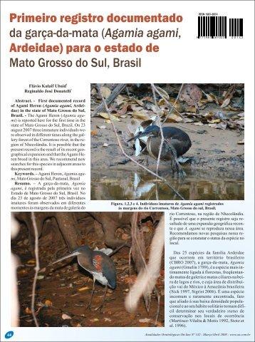 Agamia agami, Ardeidae - Atualidades Ornitológicas