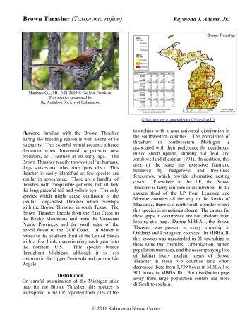 Brown Thrasher - Michigan Breeding Bird Atlas Website