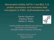 Resveratrol inhibits GATA-1 and BCL11A protein expression and ...